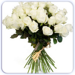 White Roses Bouquet - 27 Stems