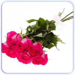 Pink Roses Bouquet - 7 Stems